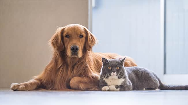 Pets and Hearing aids